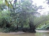 marianne-river-trinidad