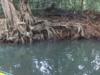 riviere-indienne-3-dominique