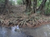 riviere-indienne-dominique