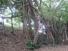 arbre_0
