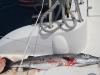 barracuda-1m-7kg